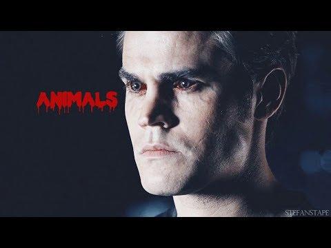 Stefan  Salvatore-Animals