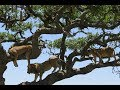 Tanzania 2018 Safari Highlights