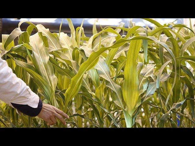 ЕК рассматривает слияние ChemChina и Syngenta - corporate