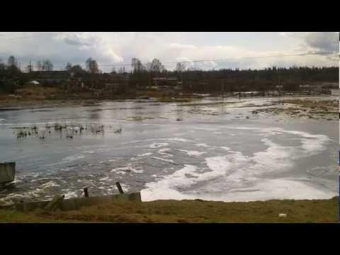 Весенняя охота на тетерева в Кировской области