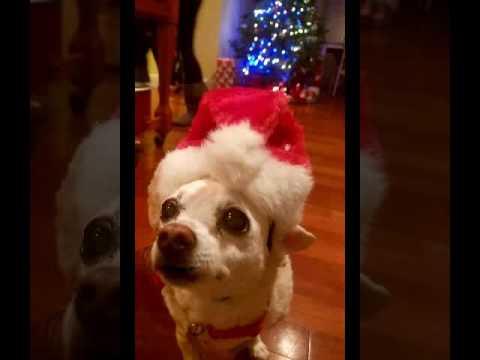 Singing Chihuahua Santa