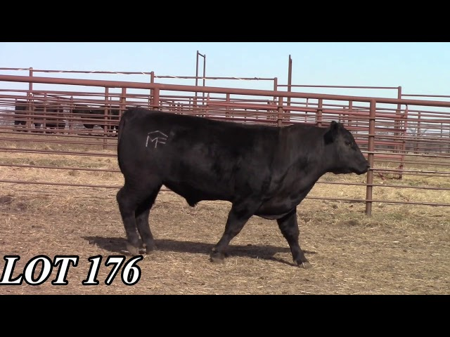 Mead Angus Farms Lot 176