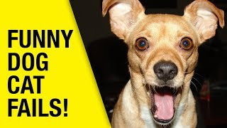 FUNNY CAT AND DOGS COMPILATION - CUTE DOG AND CATS VIDEOS 2018