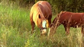 Zwierzęta Na Farmie: Mały Koń i Jego Mama / Horse Mom And Her Baby- Baw się z nami