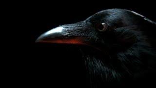 Raven Talks Hollywood | Dark Minds