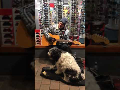Happy - The singing dog of Queenstown