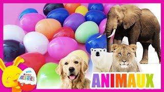 Apprendre les animaux - compétition des couleurs - Oeufs surprises - Titounis - Touni Toys