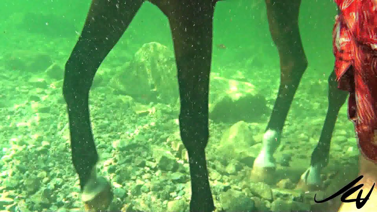 Incredible Underwater Hd Of Horse Swimming Youtube Youtube