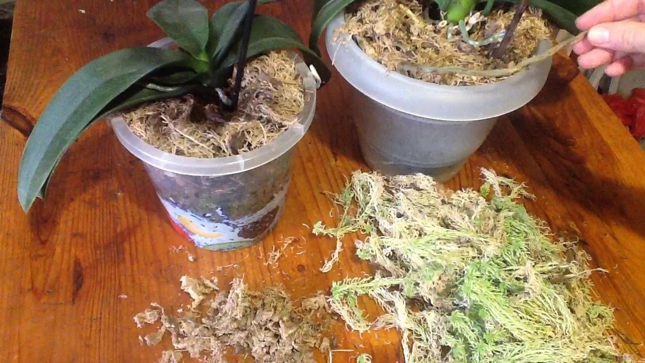 30 мар 2008. Продают сфагнум (сфагновый мох), кору, древесный уголь, торф и листовую землю. Продажа живого сфагнума, коры и других.