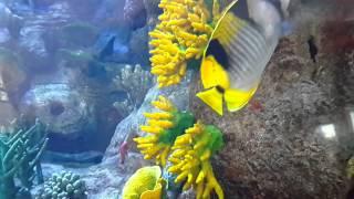 Burj Al Arab Dubai Aquarium 29.12.2015