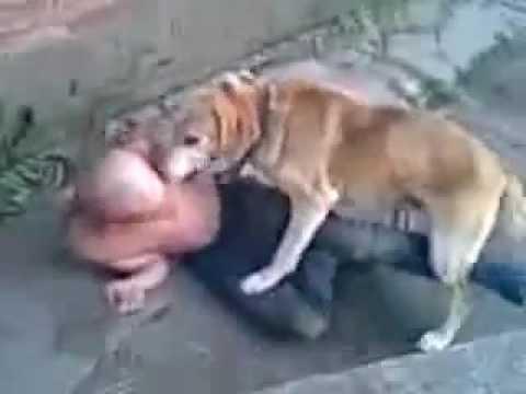 пес и алкаш- хуесос, поза 69 оказывается не только для людей)