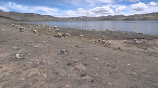 Laguna de Choclococha (Huancavelica)