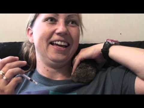 Wild Baby Bunny Care And Feeding