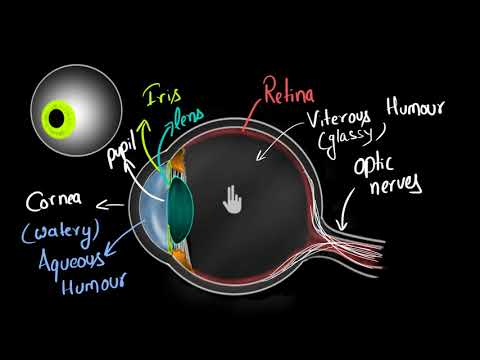 Structure of human eye (Hindi) | Human eye and the colourful