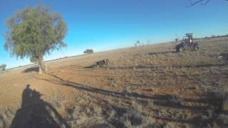 Pig Hunting from dirt bike in Australia