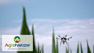 Trattamenti con drone a difesa delle colture