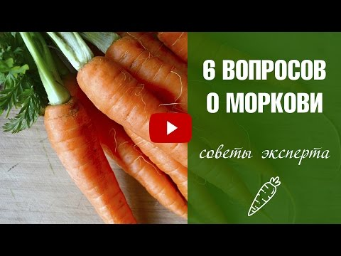 МОРКОВЬ 6 правил хорошего урожая 🌟 Урожайный огород с HitsadTV