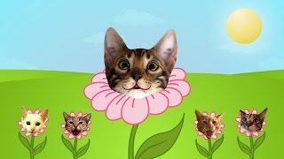 Sunshine Kitties!  (You are my Sunshine!)