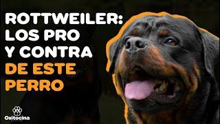 VENTAJAS Y DESVENTAJAS DE tener un perro ROTTWEILER