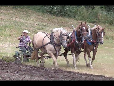 Brown Farm Pioneer Days