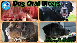 Dog Oral Ulcers