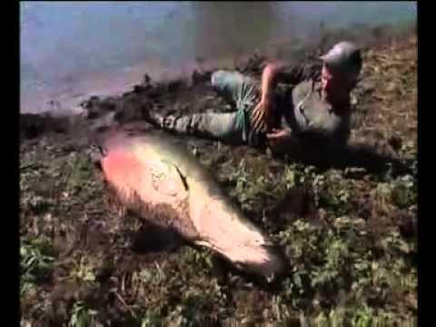 ตกปลาช่อนใหญ่โคตรๆ.flv
