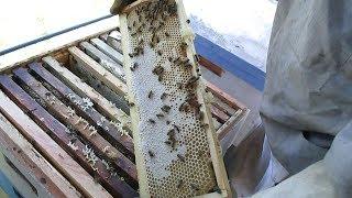 Пчелы не идут в магазин ЧТО НУЖНО ДЕЛАТЬ