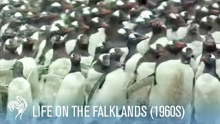 When the Falklands Were Forgotten