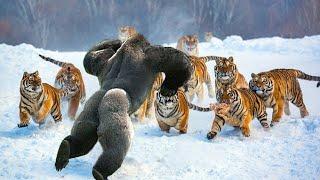 Najbardziej nieustraszone zwierzęta na świecie