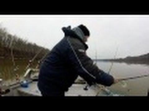 ODNR tagged blue catfish ohio river