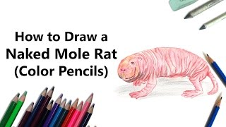 How to Draw a Naked Mole Rat with Color Pencils [Time Lapse]