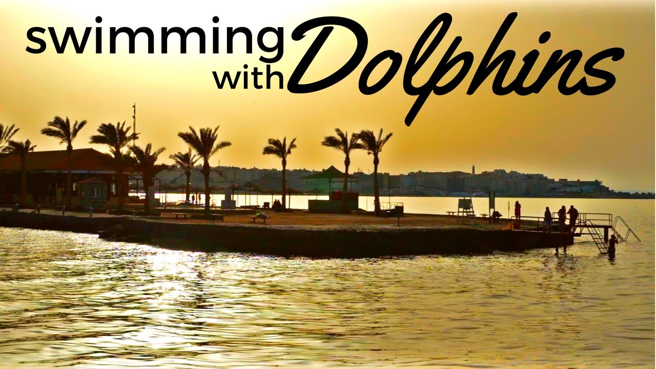 I FOUND DOLPHINS IN THE RED SEA, EGYPT مصر