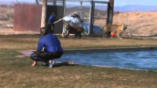 Tiger Splash at Out of Africa Wildlife Park near Sedona, Arizona www 1 keepvid com