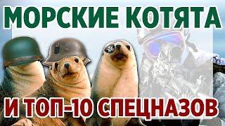 Морские котята и ТОП-10 Спецназов. Топ самых лучших спецподразделений мира.
