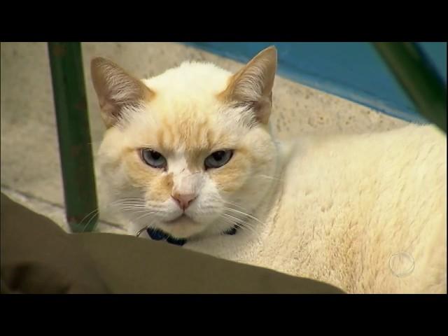 Conheça o gato que frequenta as aulas de uma faculdade de Santos (SP)