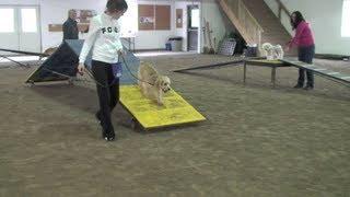 Dog Agility Training: Agility Fun Day November '10