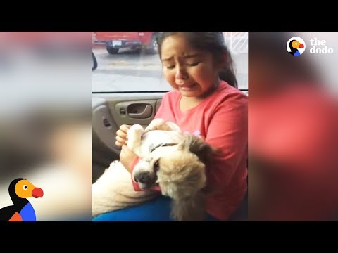 Girl Cries Over Dog's New Haircut | The Dodo