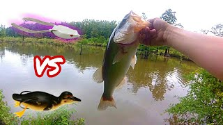 BABY DUCK Vs. FROG - Bass Fishing CHALLENGE (Surprising outcome!)