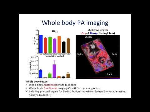 September 2017: In vivo biodistribution of contrast agents - whole body photoacoustic imaging