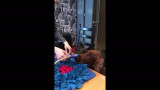 Развивающий коврик для собак - коврик Сокровищ