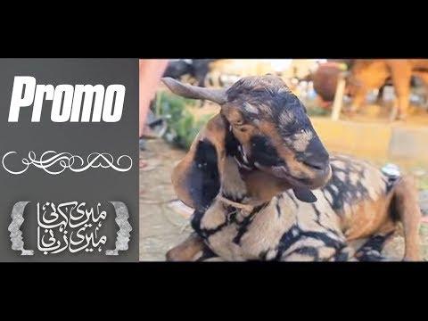 Meri Kahani Meri Zabani - SAMAA TV - Eid-ul-Azha Special