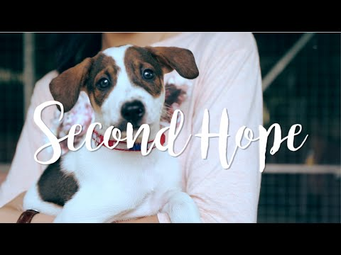 Second Hope   documentary of Singapore street dogs