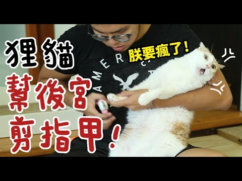 【黃阿瑪的後宮生活】狸貓幫後宮剪指甲!