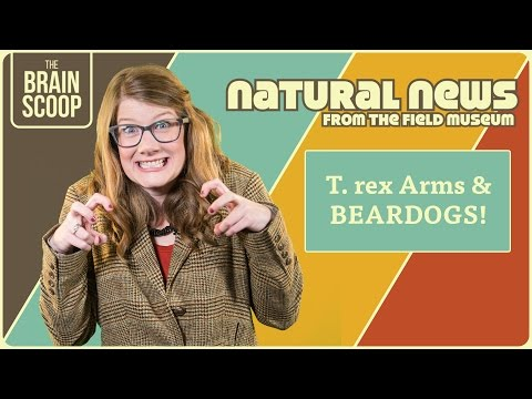 T. rex Arms & BEARDOGS!   Natural News from The Field Museum   Ep. 6