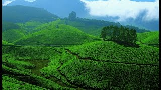 Munnar Tea Plantations | Kerala | Heaven | Gods Own Country 4k(Ultra HD)