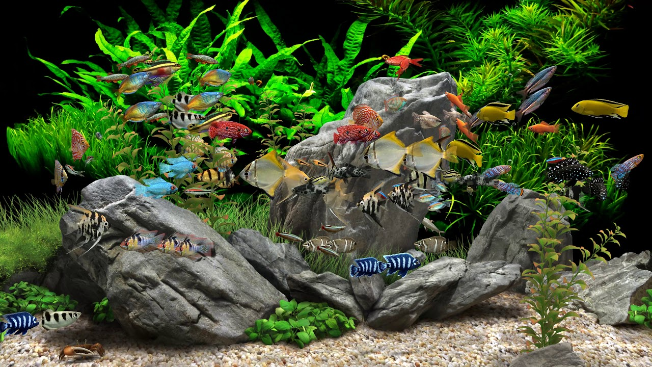 Dream aquarium 2 hours 8 tanks 4k youtube - Dream aquarium virtual fishtank 1 ...