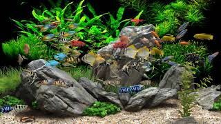 Dream Aquarium - 2 Hours - 8 T…