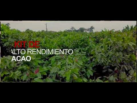 Kit De Alto Rendimiento 📈 Cacao