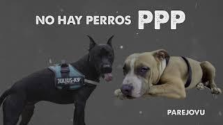 PAREJOVU | NO HAY PERROS PPP  - VU Records 2018