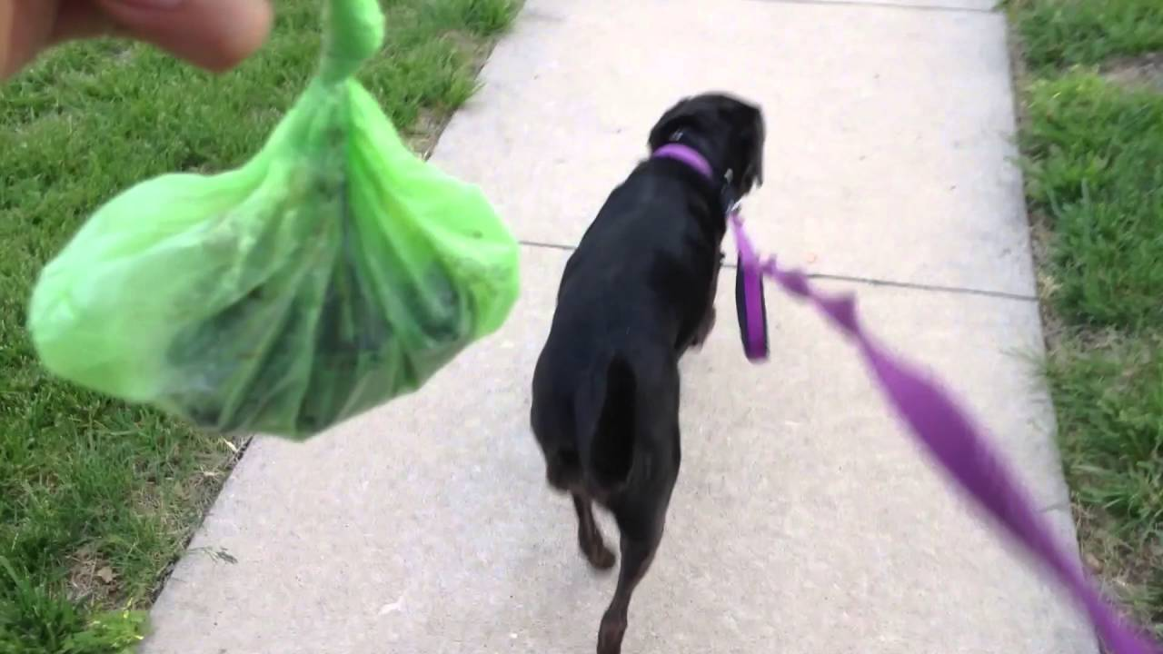 How to Pick Up Dog Poop